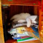adopting a cat . Boof the cat settling in, asleep in a cupboard.
