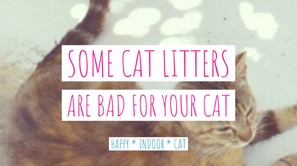 some cat litters are bad for your cat