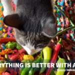 Cat Captions and Quotes